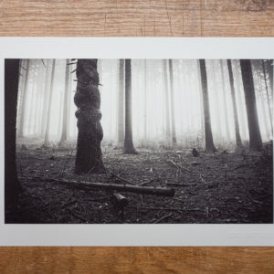 FineArt-Print | haunted trees