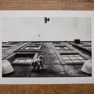 FineArt-Print | der traum vom fliegen